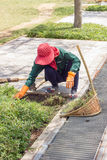 Gardener pulling out weeds in public park in Thailand, motion bl Stock Photography