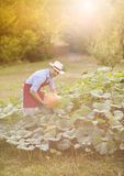 Gardener with pumpkin Royalty Free Stock Images
