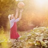 Gardener with pumpkin Stock Image