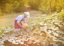 Gardener with pumpkin Royalty Free Stock Photos