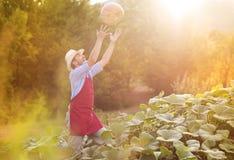 Gardener with pumpkin Royalty Free Stock Photo