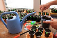 Gardener puts soil by garden tool in containers for sowing seeds. Gardener puts soil by garden tool in containers with stickers for sowing seeds on seedlings Stock Photography
