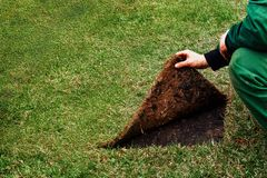 Gardener raises the seam of a lawn with grass. Concept: show the wrong side royalty free stock images