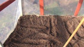 Gardener in rake soil in plastic greenhouse stock video