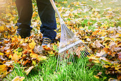 Gardener raking fall leaves in garden Stock Photo