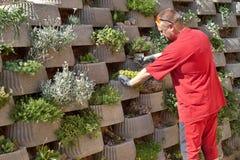 Gardener relies flowers in retaining concrete wall Stock Photos