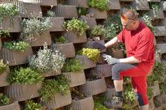 Gardener relies flowers in retaining concrete wall Stock Image