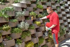 Gardener relies flowers in retaining concrete wall Stock Photography