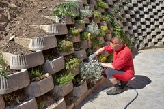 Gardener relies flowers in retaining concrete wall Royalty Free Stock Image