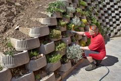 Gardener relies flowers in retaining concrete wall Royalty Free Stock Photos