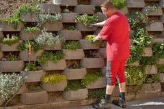 Gardener relies flowers in retaining concrete wall Stock Photo