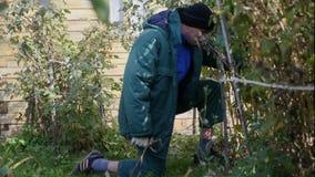 Gardener removes shears branch. Raspberries stock footage