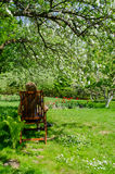 Gardener resting in chair on flowering tree shade Stock Photography