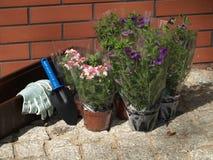 Gardener's equipment Royalty Free Stock Images