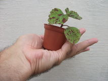 The gardener`s gift Royalty Free Stock Photo