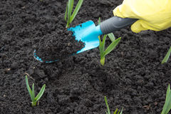 A gardeners gloved hand planting Stock Photo