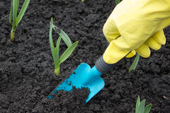 A gardeners gloved Royalty Free Stock Images