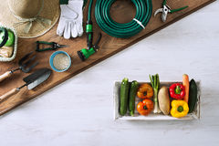 Gardener's table. Gardening and farming tools on a wooden table next to a box filled with fresh vegetables, top view royalty free stock photo
