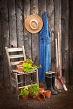 Gardener's tools. By an old shed with potted squashes and a tomato ready for transplanting Royalty Free Stock Photography
