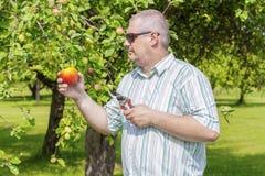 Gardener with scissors in apple orchard Stock Image