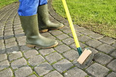 Gardener  scratching moss out of paving stones Stock Image