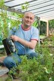Gardener with seedlings Royalty Free Stock Image