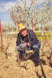 Gardener with a sharp pruner making a grape pruning Royalty Free Stock Photography
