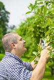 Gardener with shears Royalty Free Stock Images