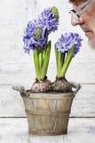 Gardener smelling hyacinth flower Stock Photos