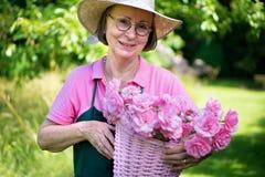 Gardener smiling while holding basket of roses. Royalty Free Stock Images