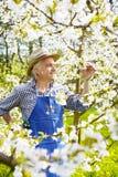 Gardener South Tirol cherry flower Strohhut Royalty Free Stock Image