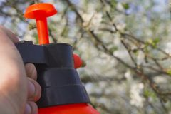 Gardener with spraying a blooming fruit tree against plant diseases and pests. Use hand sprayer with pesticides in the royalty free stock images