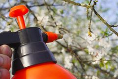 Gardener with spraying a blooming fruit tree against plant diseases and pests. Use hand sprayer with pesticides in the stock photo