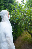 Gardener spraying fruit trees Stock Photography