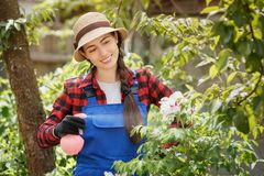 Gardener spraying pesticide or water on flowers. Happy young woman gardener in work clothes spraying pesticide or water on her peony flowers. Gardening and care royalty free stock images