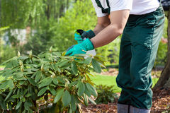 Gardener spraying a plant Royalty Free Stock Photos