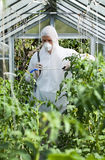 Gardener spraying plants in greenhouse Royalty Free Stock Photo