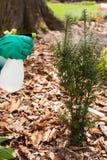 Gardener spraying plants Royalty Free Stock Photography
