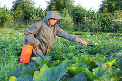 Gardener spraying potatoes Royalty Free Stock Photo