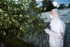 Gardener spraying trees Royalty Free Stock Photo