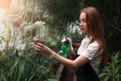 Gardener spraying water on flowers Royalty Free Stock Photography