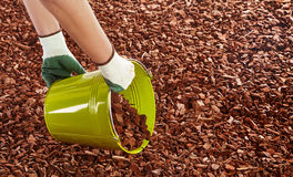 Gardener spreading wood chip mulch Stock Photography
