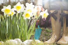 Gardener in the spring garden with beautiful flower Stock Photo