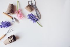 Gardener spring table top view with hyacinth flowers, peat pots and garden tools. On white background with empty space. Preparing for seasonal yard work Royalty Free Stock Image