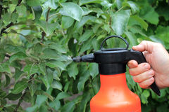 Gardener sprinkles young apple tree from pests and diseases with. Bottle sprayer. He holds sprayer in his hand. Spray fly on leaves Royalty Free Stock Image