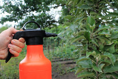 Gardener sprinkles young apple tree from pests and diseases with. Bottle sprayer. He holds sprayer in his hand. Spray fly on leaves Stock Photography