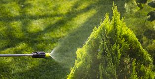 Gardener sprinkles young plum tree from pests and diseases with bottle sprayer. He holds sprayer in his hand. Gardener sprinkles young plum tree from pests and Royalty Free Stock Image