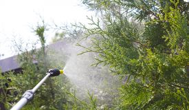 Gardener sprinkles young plum tree from pests and diseases with bottle sprayer. He holds sprayer in his hand. Gardener sprinkles young plum tree from pests and Royalty Free Stock Photo