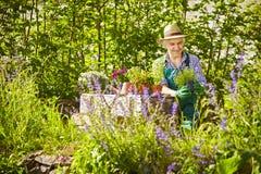 Gardener Straw hat Garden Plants Stock Images