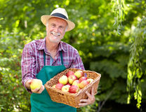 Gardener with straw hat presenting an apple Stock Images